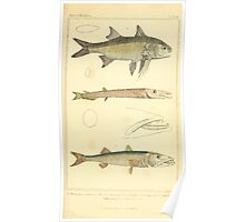 The Animal Kingdom by Georges Cuvier, PA Latreille, and Henry McMurtrie 1834  074 - Pisces Fish Poster