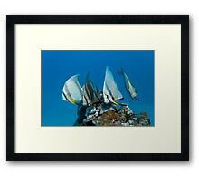 The Quartett Framed Print
