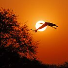 STORK CROSSING THE SUN by Marieseyes