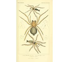 The Animal Kingdom by Georges Cuvier, PA Latreille, and Henry McMurtrie 1834  367 - Arachnides Arachnids Photographic Print