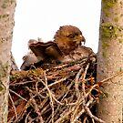 Nesting by David Friederich