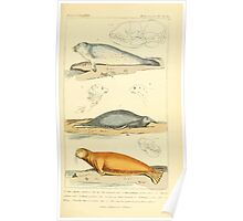 The Animal Kingdom by Georges Cuvier, PA Latreille, and Henry McMurtrie 1834 596 - Mammalia Mammals Poster