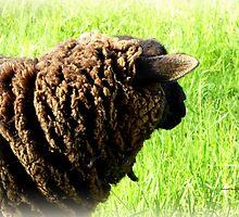 Black Sheep by Charmiene Maxwell-batten