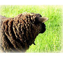 Black Sheep Photographic Print