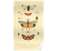 The Animal Kingdom by Georges Cuvier, PA Latreille, and Henry McMurtrie 1834  483 - Insecta Insects Poster