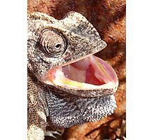 The Laughing Chameleon Photographic Print