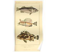 The Animal Kingdom by Georges Cuvier, PA Latreille, and Henry McMurtrie 1834  088 - Pisces Fish Poster
