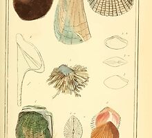 The Animal Kingdom by Georges Cuvier, PA Latreille, and Henry McMurtrie 1834  267 - Mollusca Mollusks by wetdryvac