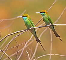 BEE-EATERS by Marieseyes