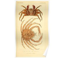 The Animal Kingdom by Georges Cuvier, PA Latreille, and Henry McMurtrie 1834  312 - Crustacea Crustaeans Poster