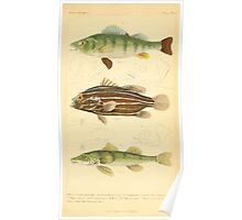 The Animal Kingdom by Georges Cuvier, PA Latreille, and Henry McMurtrie 1834  057 - Pisces Fish Poster