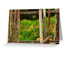 Hill End Poppies Greeting Card