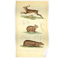 The Animal Kingdom by Georges Cuvier, PA Latreille, and Henry McMurtrie 1834 610 - Mammalia Mammals Poster