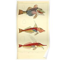 The Animal Kingdom by Georges Cuvier, PA Latreille, and Henry McMurtrie 1834  080 - Pisces Fish Poster