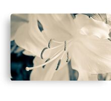 Earth Day (Lily) Canvas Print