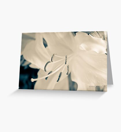 Earth Day (Lily) Greeting Card