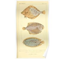 The Animal Kingdom by Georges Cuvier, PA Latreille, and Henry McMurtrie 1834  184 - Pisces Fish Poster