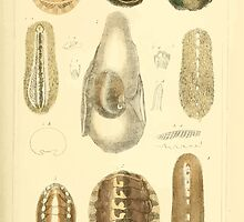 The Animal Kingdom by Georges Cuvier, PA Latreille, and Henry McMurtrie 1834  257 - Mollusca Mollusks by wetdryvac