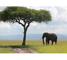 Elephant and tree Photographic Print