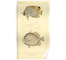 The Animal Kingdom by Georges Cuvier, PA Latreille, and Henry McMurtrie 1834  120 - Pisces Fish Poster