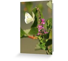 Butterfly Flight Greeting Card