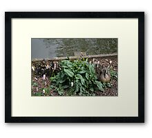 Mother & Babies Framed Print