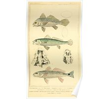 The Animal Kingdom by Georges Cuvier, PA Latreille, and Henry McMurtrie 1834  099 - Pisces Fish Poster