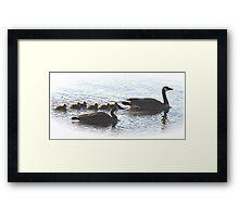 The Mr Canada Goose Family Framed Print