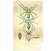 The Animal Kingdom by Georges Cuvier, PA Latreille, and Henry McMurtrie 1834  382 - Arachnides Arachnids Poster