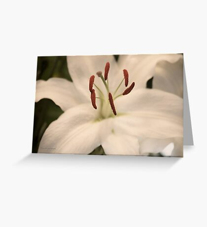 Tender Lily Greeting Card