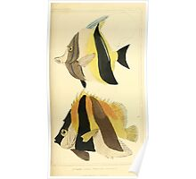 The Animal Kingdom by Georges Cuvier, PA Latreille, and Henry McMurtrie 1834  114 - Pisces Fish Poster