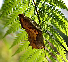 pupa  by robmac
