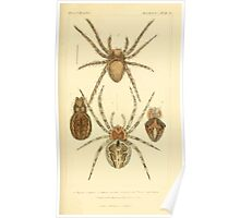 The Animal Kingdom by Georges Cuvier, PA Latreille, and Henry McMurtrie 1834  388 - Arachnides Arachnids Poster