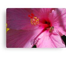 On Pink Petal Canvas Print
