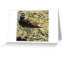 Killdeer Stare Greeting Card