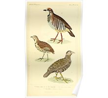 The Animal Kingdom by Georges Cuvier, PA Latreille, and Henry McMurtrie 1834 710 - Aves Avians Birds Poster