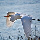 Great Egret by rhiannakelly