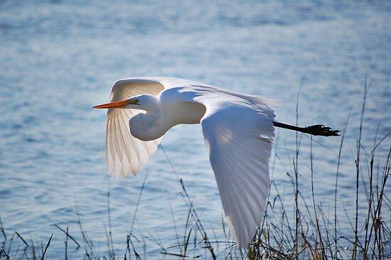 Great Egret by rhiannakelly