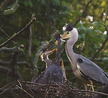 Feeding Time In The Nest! by Franco De Luca Calce