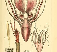The Animal Kingdom by Georges Cuvier, PA Latreille, and Henry McMurtrie 1834  212 - Mollusca Mollusks by wetdryvac