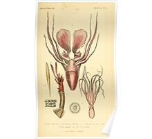 The Animal Kingdom by Georges Cuvier, PA Latreille, and Henry McMurtrie 1834  212 - Mollusca Mollusks Poster