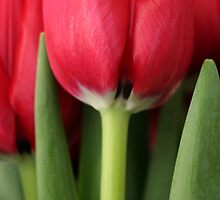 Tulips In Red by George Paul Miller
