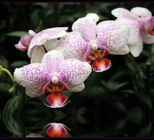 Janet's Orchids by George Paul Miller