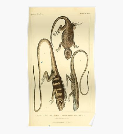 The Animal Kingdom by Georges Cuvier, PA Latreille, and Henry McMurtrie 1834  010 - Reptilia Reptiles Poster