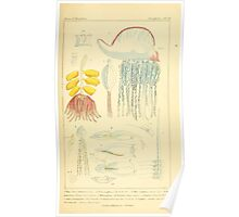 The Animal Kingdom by Georges Cuvier, PA Latreille, and Henry McMurtrie 1834  554 - Zoophytes Plant-Like Animals Poster