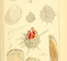 The Animal Kingdom by Georges Cuvier, PA Latreille, and Henry McMurtrie 1834  259 - Mollusca Mollusks by wetdryvac