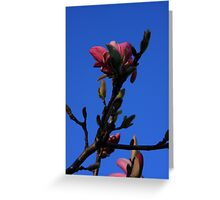 Magnolia in Late Light Greeting Card