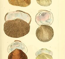 The Animal Kingdom by Georges Cuvier, PA Latreille, and Henry McMurtrie 1834  273 - Mollusca Mollusks by wetdryvac
