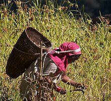 Millet Farmer in Annapurna Region by Chris van Raay