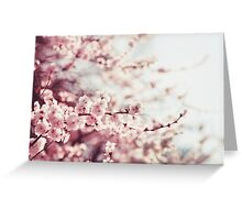 Spring Cherry blossoms, pink flowers. Greeting Card